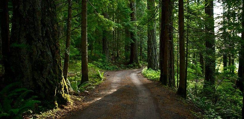 Oposiciones forestales