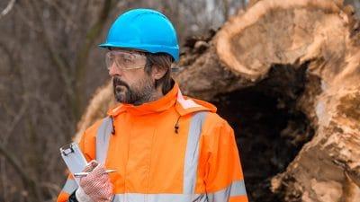 Cómo ser agente forestal y proteger el medioambiente