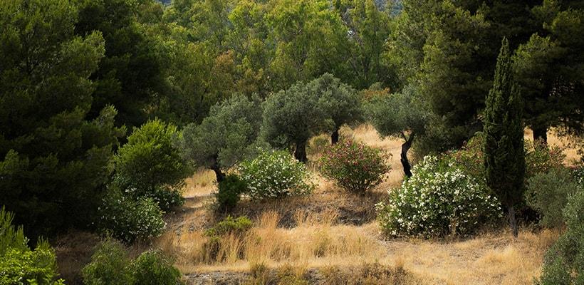 Funciones Ayudante Técnico Forestal Andalucía - oposiciones forestales