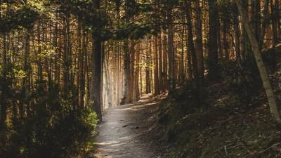 Oposiciones Guarda Forestal del País Vasco
